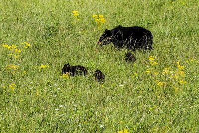 bears-5