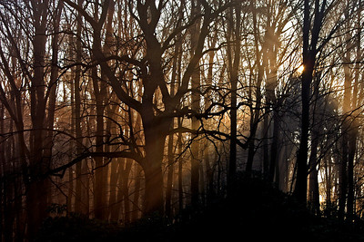 Early morning hours in the forest around Schloss Wendgräben
