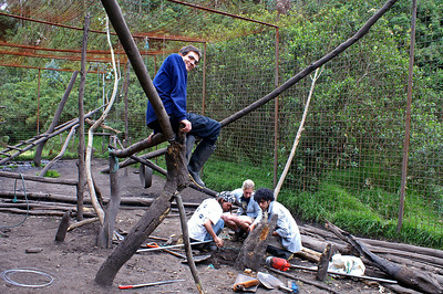 Alex and the others construction new toys in the Andean Bear cage