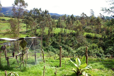 Most of the bigger animals are accomodated in this valley a bit further away from the hacienda