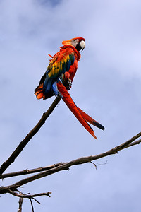 Tame parrots (that cannot be released because the have broken wings) form the welcome commetee of the hacienda.