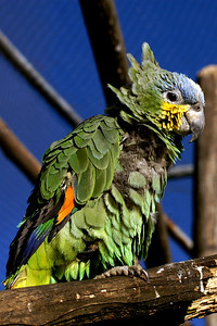 Yet another parrot