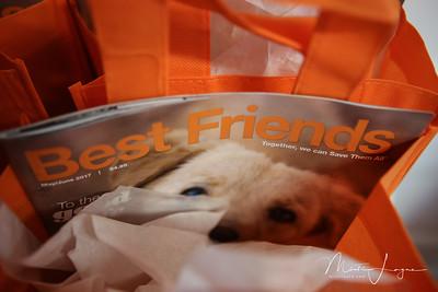 Best-Friends-San-Francisco-Misti-Layne_09