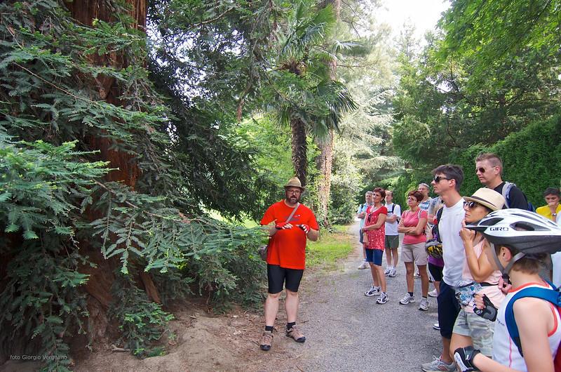 Sequoia (Sequoia sempervirens), Tiziano Fratus - parco del Castello di Miradolo