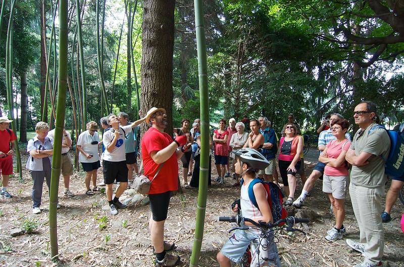 Bambù giganti, Tiziano Fratus - parco del Castello di Miradolo