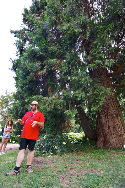 Tiziano Fratus, calocedro (Calocedrus decurrens) - parco de Il Torrione