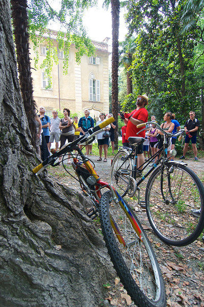 Ginkgo biloba, Tiziano Fratus - parco del Castello di Miradolo