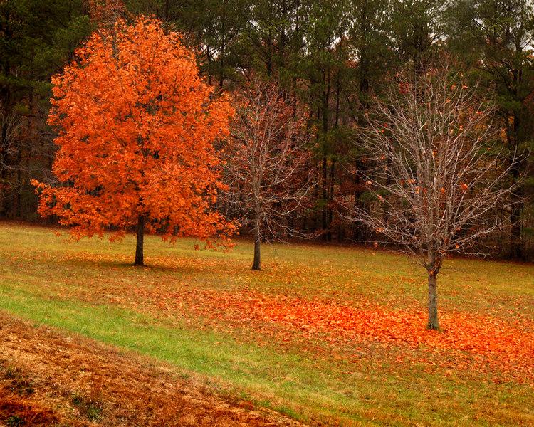 Natchez Trace Parkway, Alabama<br /> November 7, 2006