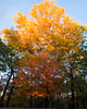 Fall Trees<br /> Jeff Busby National Park Campground<br /> Natchez Trace Parkway, Mississippi