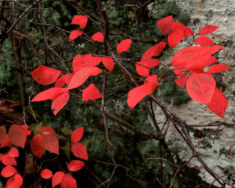 Cave Spring Natural Spring, MS<br /> Natchez Trace Parkway<br /> November 7, 2006