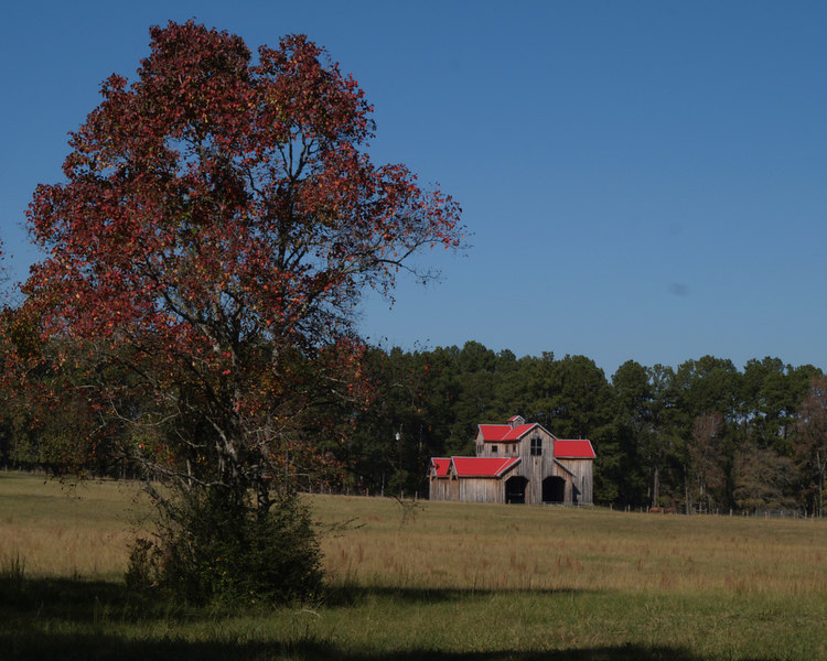 """Red Roof Barn<br /> Texas Highway 21<br /> El Camino Real de los Tejas<br /> November 18, 2006<br /> <br /> """"Designated as a National Historic Trail in 2004, El Camino Real de los Tejas (Highway 6 in Louisiana and Highway 21 in Texas) has existed for more than 300 years.<br /> <br /> El Camino Real has its easternmost beginning in Natchitoches, Louisiana and runs from Piney Woods through rolling hills to the arid lands of Old Mexico.<br /> <br /> The Spaniards and the French that marked the trail were followed by such men as Moses Austin and his son Stephen Fuller Austin (The Father of Texas), Jim Bowie, Davy Crockett, Sam Houston, and early missionaries of multiple faiths.<br /> <br /> An abundance of historic cities await the modern day traveler on the Texas stretch of El Camino Real, including San Antonio, Bastrop, Crockett, Alto, Nacogdoches, and San Augustine.""""  from  <a href=""""http://www.elcaminorealtx.com/"""">http://www.elcaminorealtx.com/</a>"""