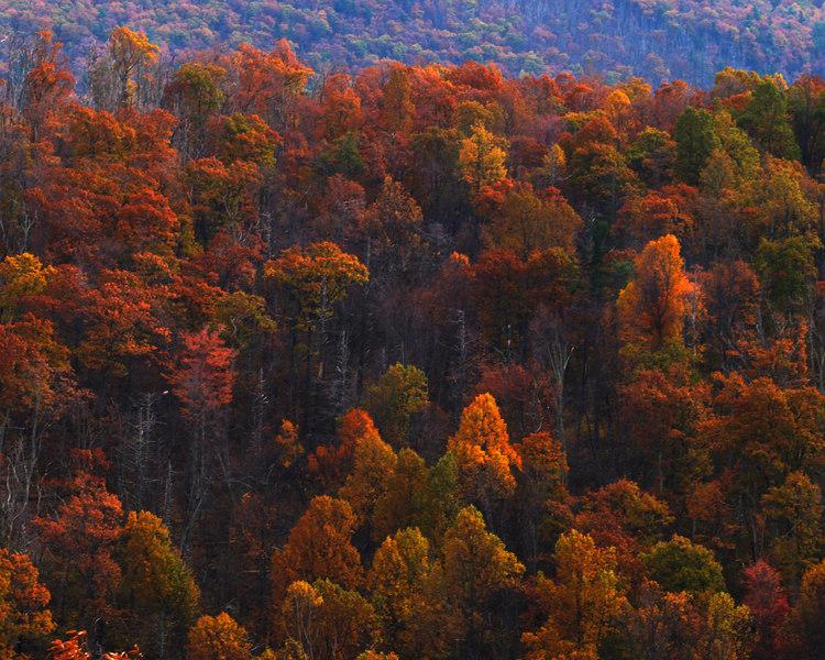 Fall Leaves<br /> Shenandoah National Park<br /> Virginia  - October 26, 2006