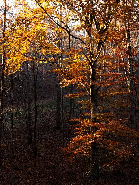 Trees near Jeff Busby, MS<br /> Natchez Trace Parkway<br /> November 5, 2006