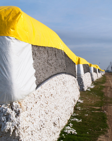 Cotton Bales<br /> Louisiana Route 84<br /> Vidalia, Louisiana<br /> 14 November 2006