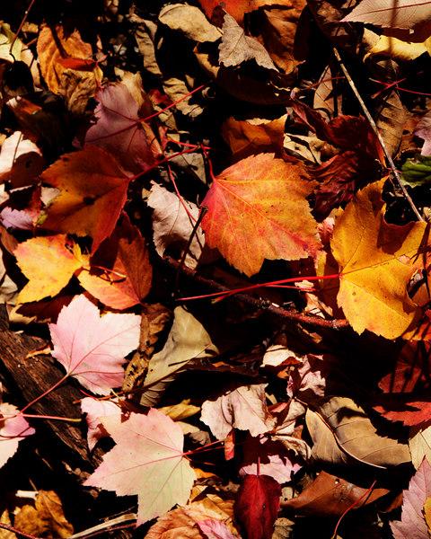 Fall Leaves, Overall Falls, Virginia<br /> Shenandoah National Park<br /> Virginia  - October 26, 2006