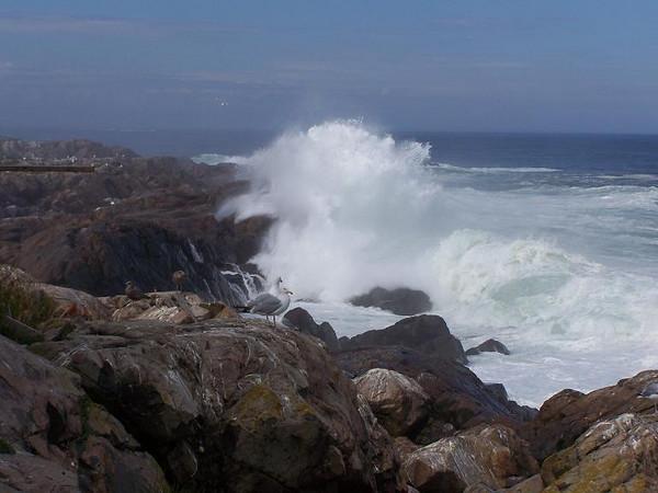 Exploding ocean sprays.