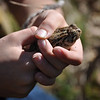 "....and this lovely toad.  <font size=""2"">Photo by Henrietta Yelle</font>"
