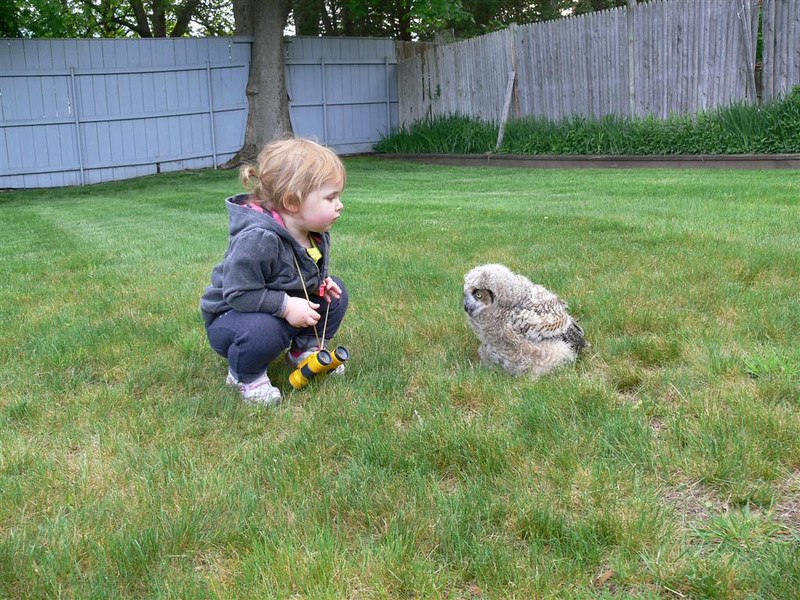 "Another young birder and a young, great-horned owl have a chance to check each other out. Who's counting who?  <font size=""2"">Photo by Norman Smith</font>"
