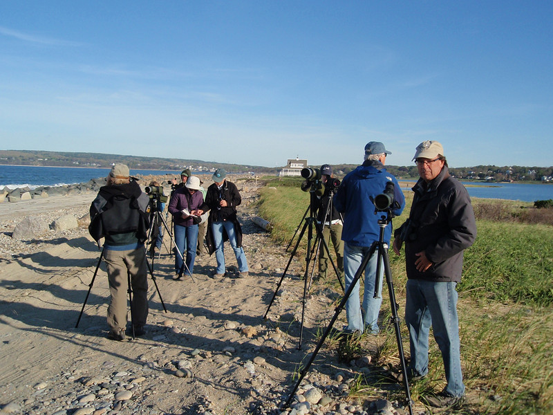 "<font size=""4""><strong>Coastal birders were awestruck by the numbers of certain species at Eastern Point in Gloucester, Nahant, Marblehead Neck, and Plum Island. </strong></font>"