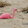 "<font size=""4""><strong>And, of course, a pink flamingo!</strong></font>  Photo courtesy of Myer Bornstein"