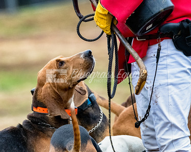 Dog begs for treat during The Blessing of the Hounds Ceremony. The Long Run Woodford Hounds at Shakertown Village, Harrodsburg, Kentucky 11.24.18 Photos by Laura Palazzolo