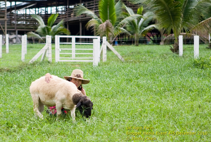 """If you're lucky enough, you can be a """"close friend"""" of a highly sociable goat, but you need to discover one such goat. Most will run off before you can even get close enough. In this photo: Sally."""