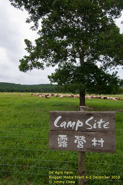 """Visitors may rent a space inside this camp site for a small charge. However, they have to bring their own tents and equipments. Not sure if a campfire is allowed but the expectation is """"no"""", as the area is well-maintained -- the grass is the food for goats. The campsite is located just behind the chalets."""
