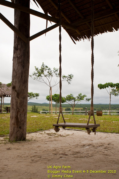 Swing section for the kids (and adults). The 3 swings are located just outside farm mart.