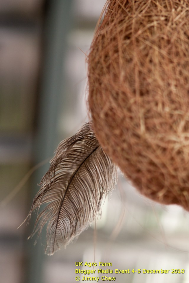 Ostrich's feather on hay ball hanging at the dining area.