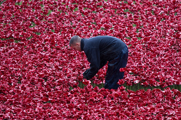 Blood Swept Lands and Seas of Red, An Art Installation Marking One Hundred YearBritain's involvement in the First World Wars Since