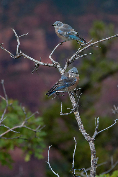 Grand Canyon Birds
