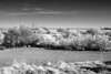 Winter's day at Bluff Lake  b&w