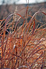 Bluff Lake Fall Grasses