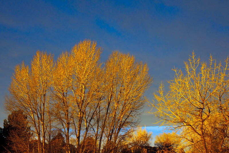 Greensview Cottonwoods