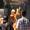PHOTOS: Body Worlds Decoded