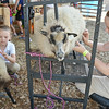 Kelsey, 8, (left) and Devin Veilleuz, 13, (right) of Lakefield, prepare their sheep Meredith and Louise for a show at the Bolton Fair on Saturday morning. SENTINEL & ENTERPRISE / Ashley Green