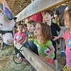 (From left) Maddy Nelson, Eila Nelson, Bran Walsh, Celia Moeser, Toby Walsh (back) and Farren Moeser peek in at a cow at the Bolton Fair on Saturday morning. SENTINEL & ENTERPRISE / Ashley Green