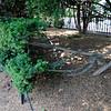 Public Gardens nearby