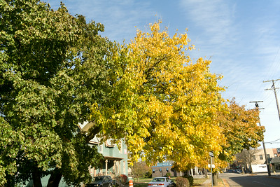Foliage in Ypsilanti