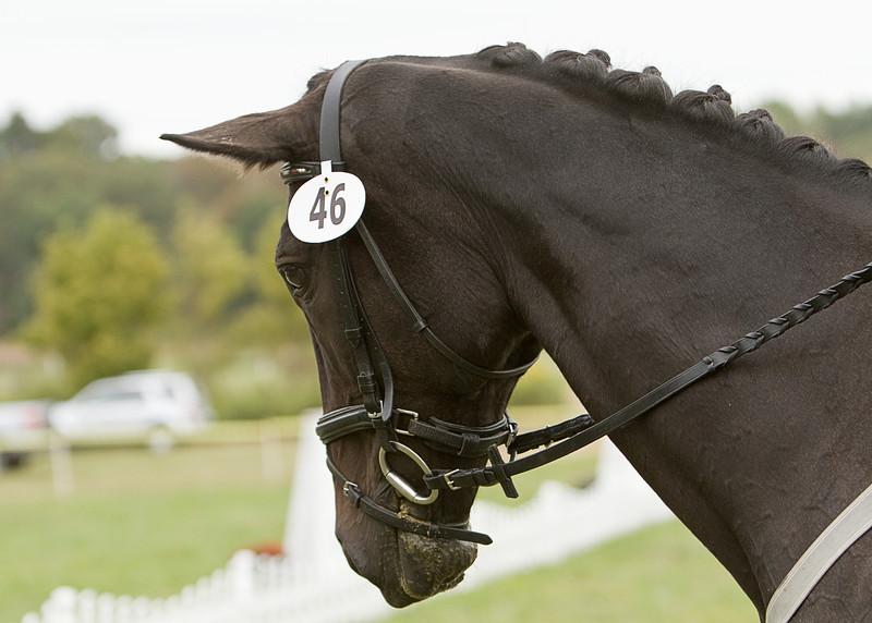 My Sally Sue  Dunnabeck horse trials