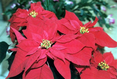 Brownwood,Christmas Time