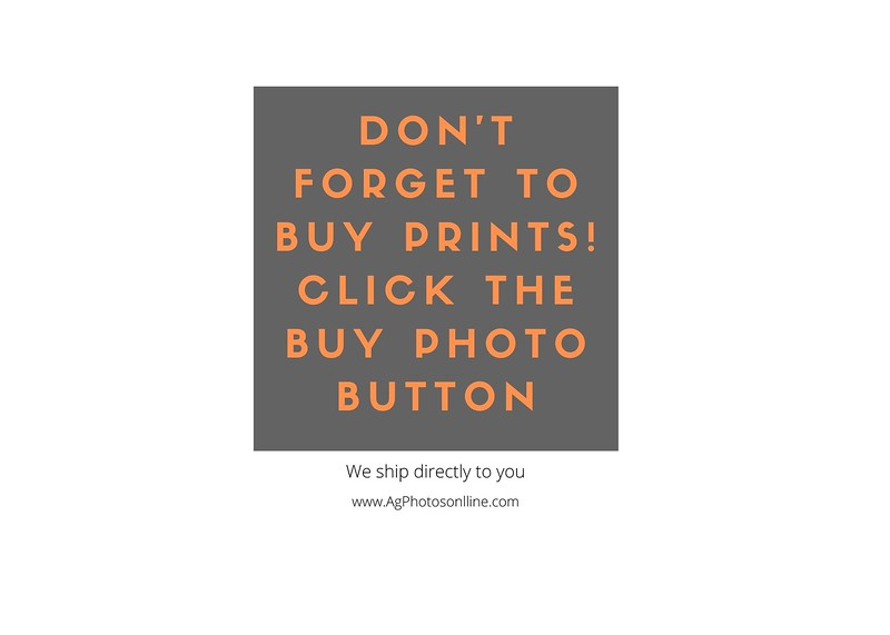 Don't forget to buy prints & Cards! Click the buy button (1)