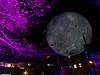 20191102 (2055) 'Bull Moon Rising' installation, Durham NC (image by Dilip Barman)