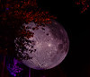 20191102 (2043) 'Bull Moon Rising' installation, Durham NC (image by Dilip Barman)