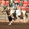 Horse_WSC_0001