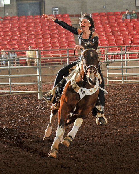 Horse_WSC_0858