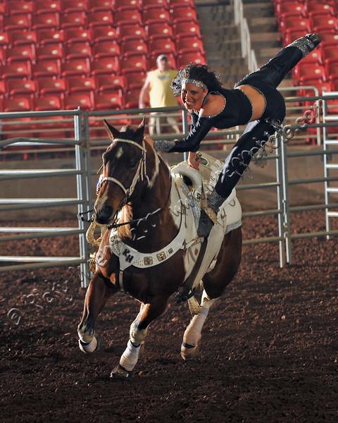 Horse_WSC_0860