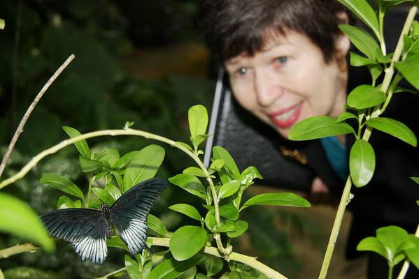 2010 Butterflies in the Garden