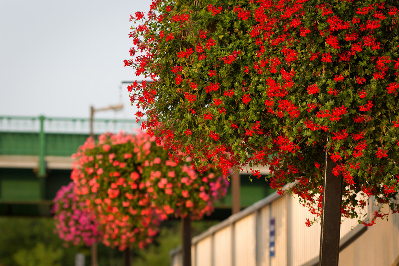 Hanging baskets along the river front.