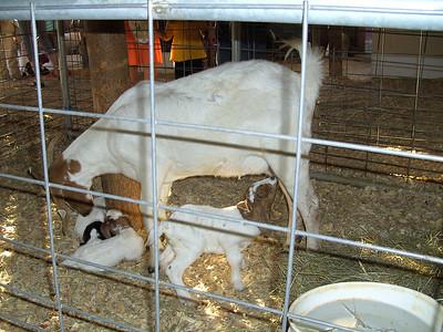 Cabarrus County Fair 2008